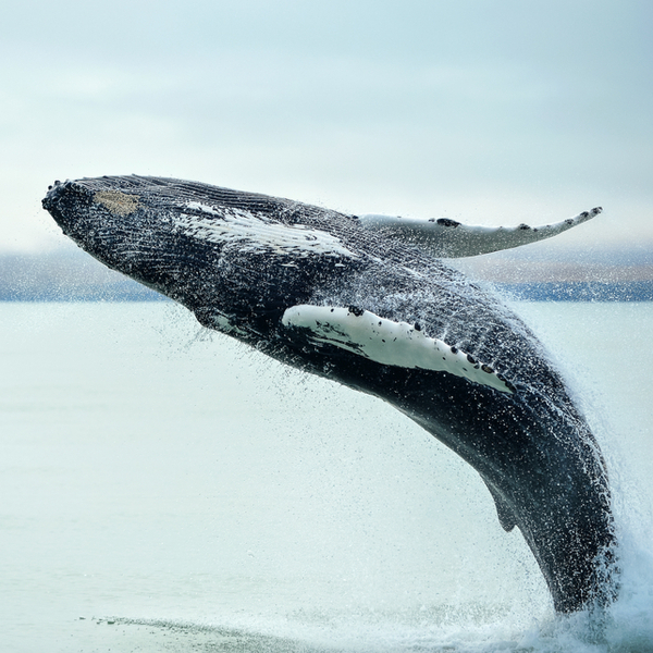 where to see whales reykjavik